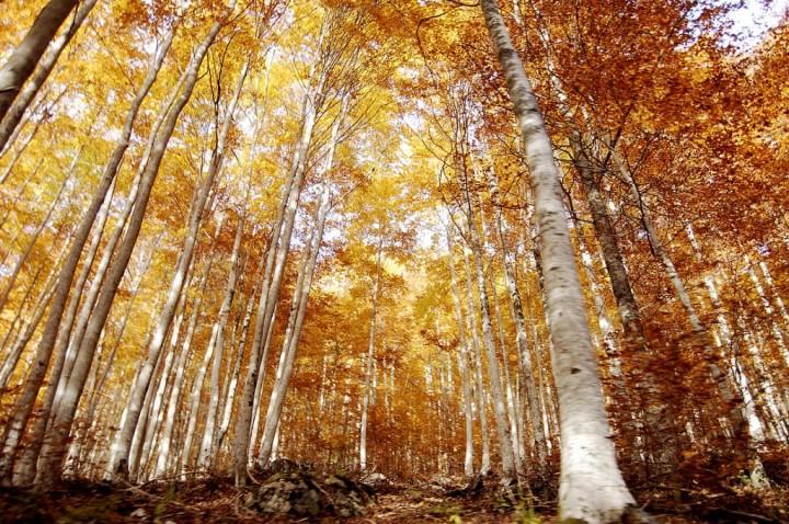 Imparare dagli alberi